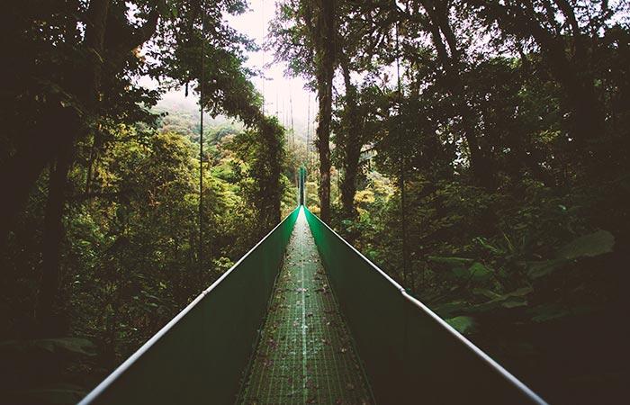 hanging bridge in Monteverde Cloud Forest Costa Rica