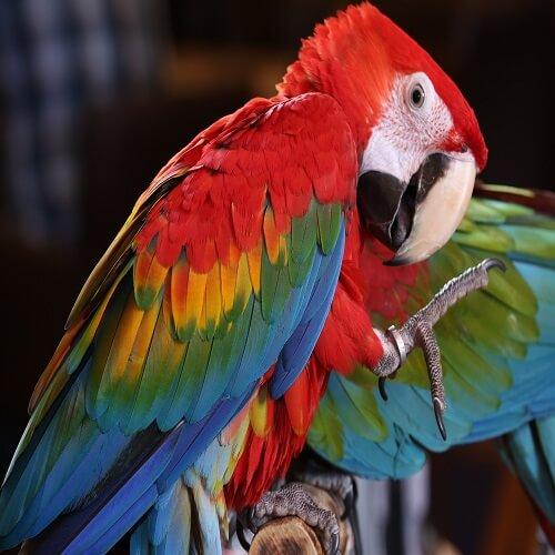 Amazon Rainforest | Bucket List Group Travel