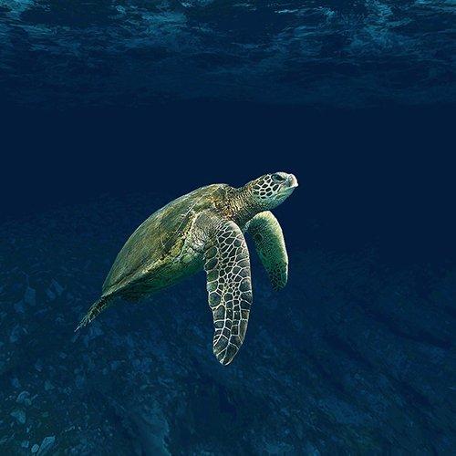 Belize Barrier Reef | Bucket List Group Travel