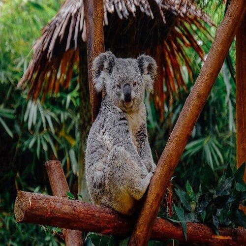 Brisbane | Bucket List Group Travel