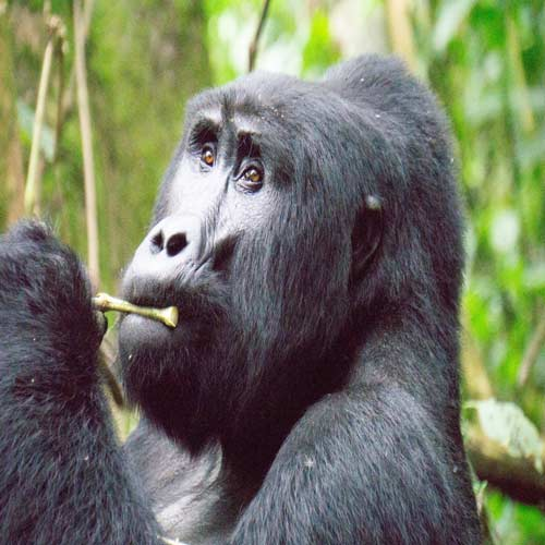 Bwindi Impenetrable National Park | Bucket List Group Travel