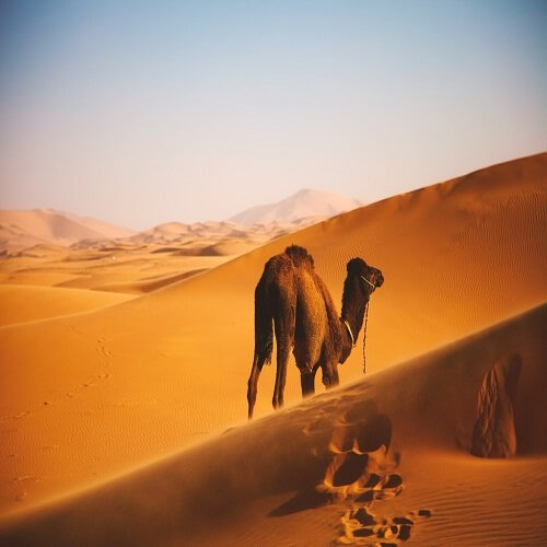 Erg Chebbi morocco | Bucket List Group Travel