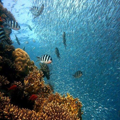 Great Barrier Reef | Bucket List Group Travel