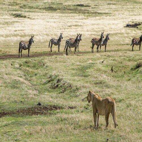 Ngorongoro Conservation | Bucket List Group Travel