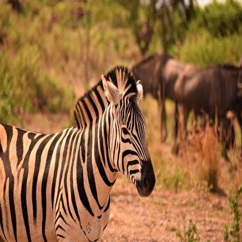Pretoria | Bucket List Group Travel