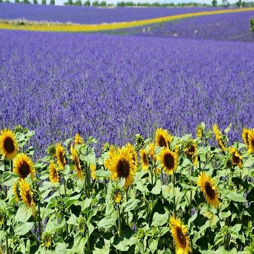 Provence | Bucket List Group Travel
