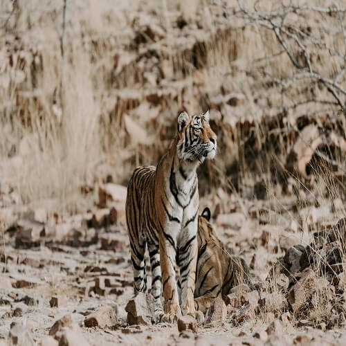 Ranthambore | Bucket List Group Travel