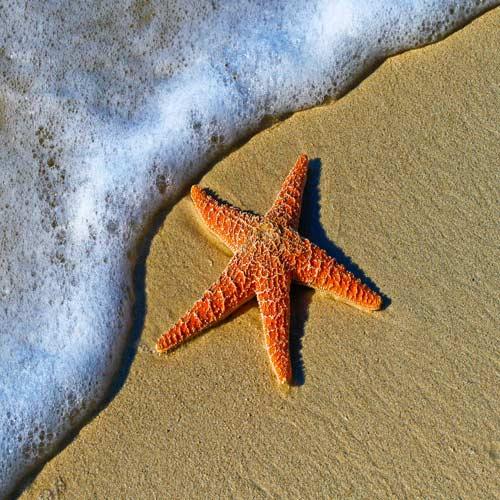 Starfish-Point | Bucket List Group Travel