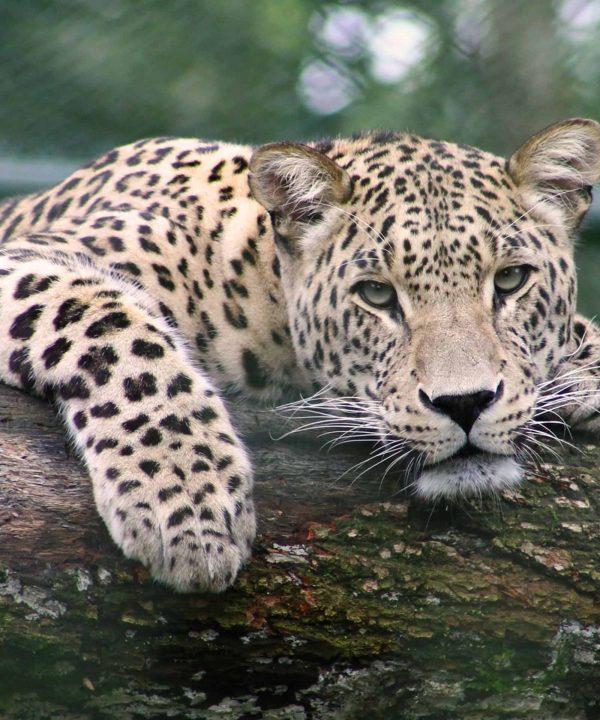 wildlife | Bucket List Group Travel