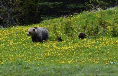 BanffJasper | Bucket List Group Travel