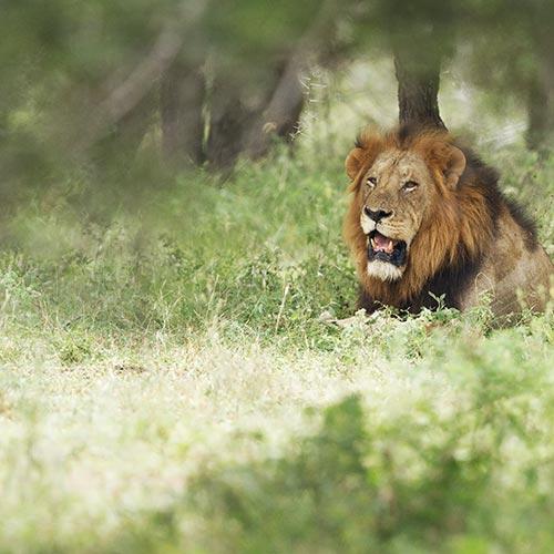 Akagera National Park   Bucket List Group Travel