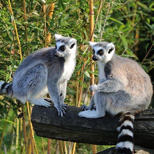 Lemur-Island | Bucket List Group Travel