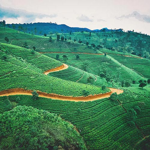 Nuwara-Eliya | Bucket List Group Travel