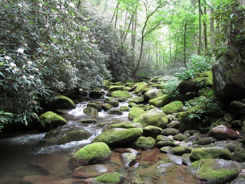 Plan Your Visit - Great Smoky Mountains National Park