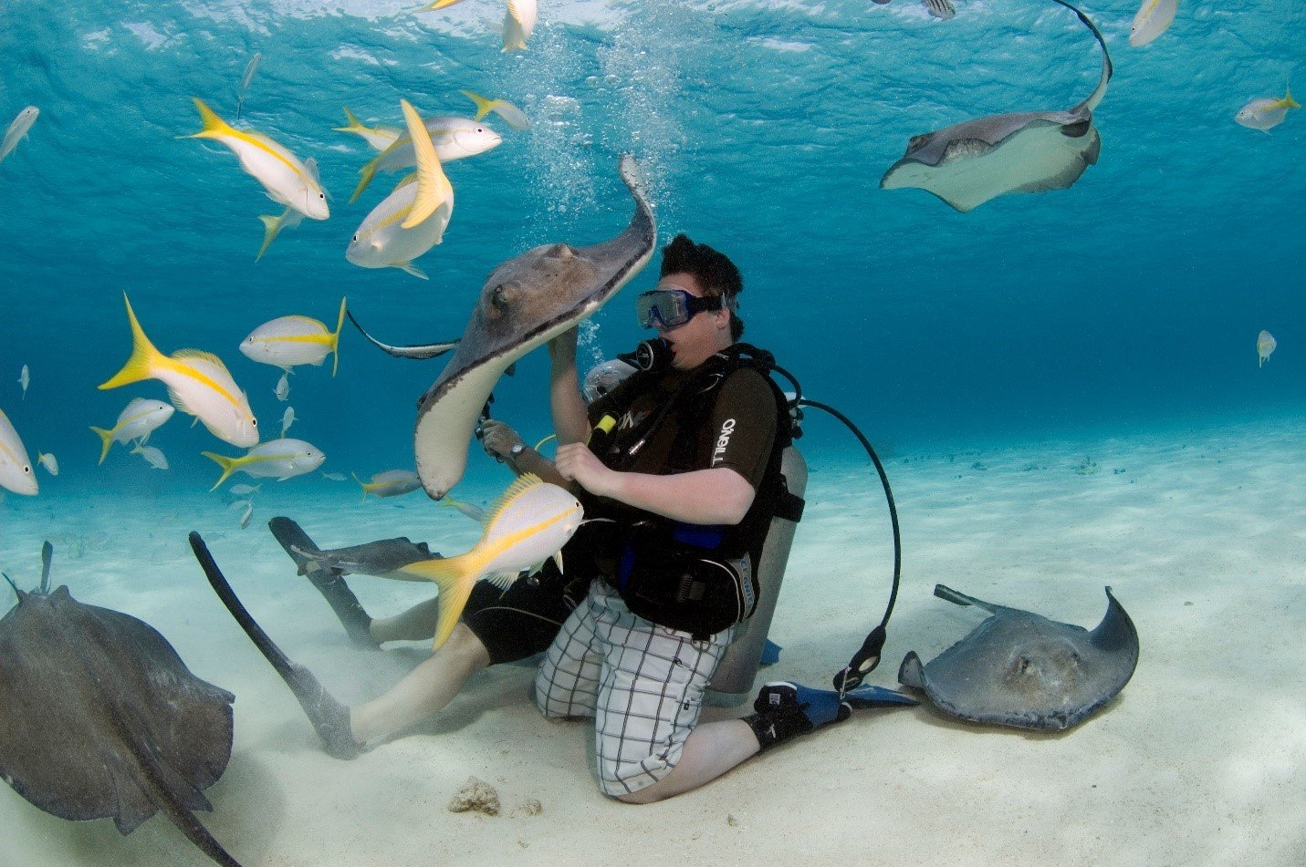 Visit Stingray City Grand Cayman's most famous attraction